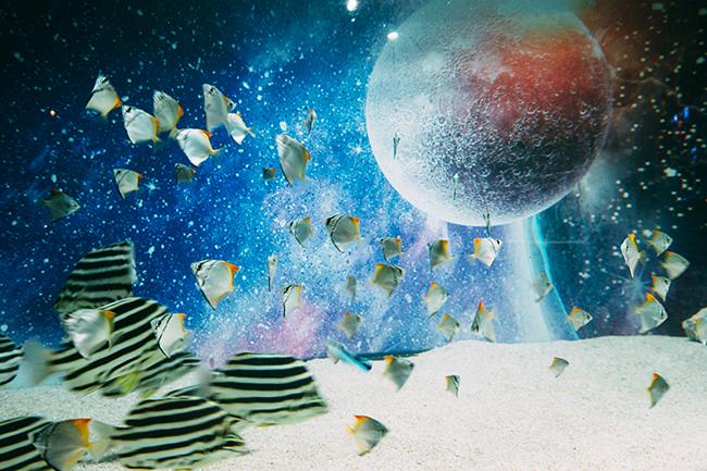 日本初となる宇宙 × アクアリウムをコンセプトにした期間限定水族館 アクアリウム宇宙旅行「UNDER WATER SPACE」が2021年8月22日(日)までの期間限定で神奈川県横浜市の大型商業施設「横浜ワールドポーターズ」にオープン!