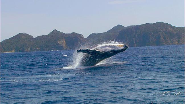 NHKの人気自然番組『ダーウィンが来た!』映画化最新作「驚き!海の生きもの超伝説 劇場版 ダーウィンが来た!」が、2021年6月11日(金)よりユナイテッド・シネマほか全国ロードショー!海の不思議を謎解く冒険に出発!ナレーターは水瀬いのり、さかなクン。