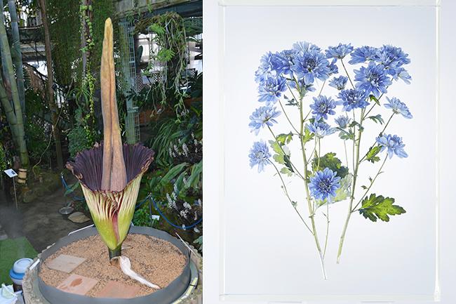 特別展「植物 地球を支える仲間たち」が、2021年7月10日(土)~9月20日(月・祝)まで国立科学博物館で開催!食虫植物や多肉植物、「○○すぎる」珍妙な植物といったさまざまな観点から植物を総合的に紹介する、これまでにない大規模な展覧会です。