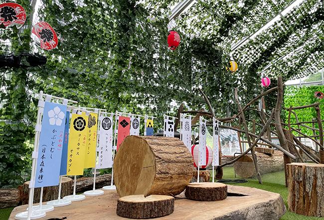 世界最大のカブトムシ「ヘラクレスオオカブト」など6種のカブトムシと、七色に輝く世界一美しいクワガタとして大人気の「ニジイロクワガタ」など8種のクワガタを展示する甲虫ランド「びーとるランド君津」で、2021年7月22日(木)~8月31日(火)まで『びーとるランド夏祭り』を開催!